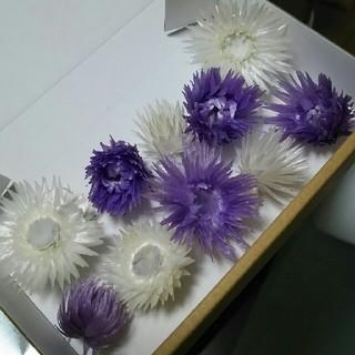 【紫姫様専用】シルバーデージー2色(ドライフラワー)