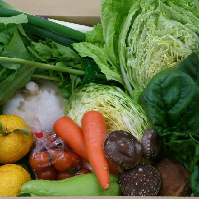 ☆misa様 専用ページ☆ 食品/飲料/酒の食品(野菜)の商品写真
