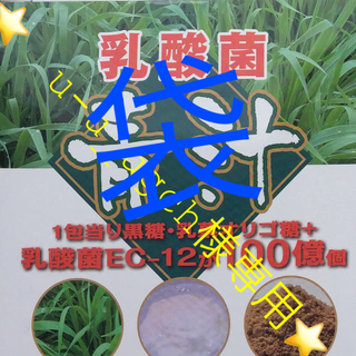 u-u_ugch様⭐️送料込⭐️2箱60包 乳酸菌 オリゴ糖 青汁 ゴーヤ (青汁/ケール加工食品)