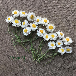 花かんざしドライフラワーS20本セット✳︎✳︎送料無料(ドライフラワー)