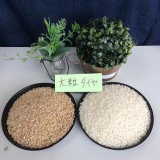 大粒ダイヤ  滋賀県産  29年産  白米27kg(米/穀物)