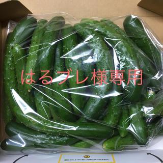 はるブレ様専用  ひめきゅうり(野菜)