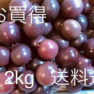 パッションフルーツ  2kg  (フルーツ)