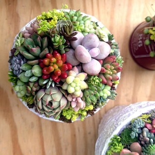 多肉植物 寄せ植え ◎宅配便込み◎ ラベンダー鉢 リメイク鉢 そのまま飾れる♪(その他)
