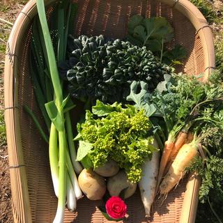 【blancさま専用】渥美半島から直送!旬彩野菜バスケット【M】(野菜)