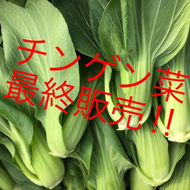 チンゲン菜!最終!5キロ 食品/飲料/酒の食品(野菜)の商品写真