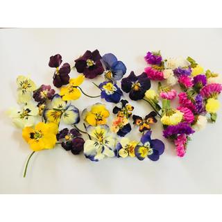 花材❁ビオラ&スターチス入り❁(ドライフラワー)
