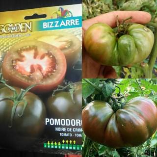 イタリア野菜の種 黒いトマト ブラッククリム 10粒(野菜)
