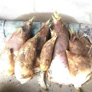 薮崎家の筍 9.5kg 送料無料(野菜)
