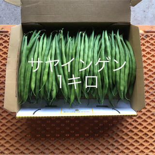 鹿児島産サヤインゲン  1キロ^_^(野菜)