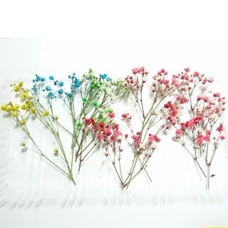かすみ草 ドライフラワー⑧ 花材(ドライフラワー)