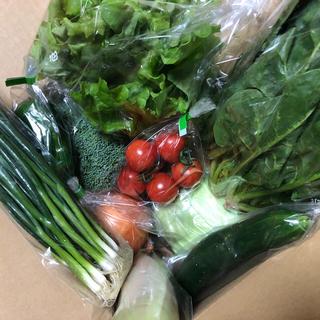おまかせ野菜セット M(野菜)