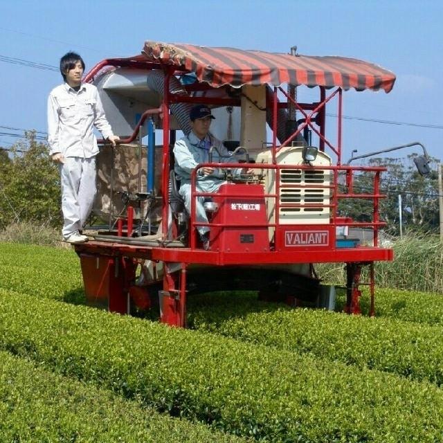 2018年産 無農薬 粉末緑茶 新茶 無農薬 オーガニック 煎茶 有機栽培  食品/飲料/酒の飲料(茶)の商品写真