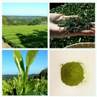 2018年産 無農薬 粉末緑茶 新茶 無農薬 オーガニック 煎茶 有機栽培 (茶)