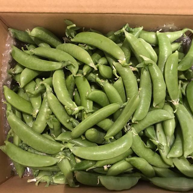 スナップエンドウ1.6kg 食品/飲料/酒の食品(野菜)の商品写真