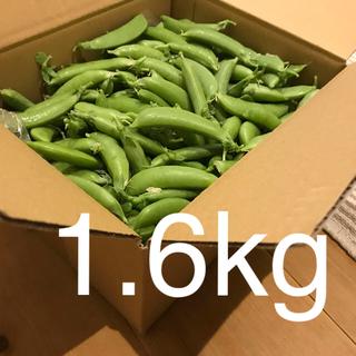 スナップエンドウ1.6kg(野菜)