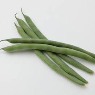 【数量限定!】インゲン豆の種 約50粒!(野菜)