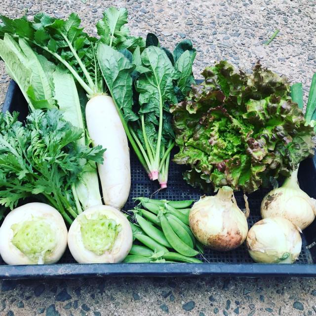 渥美半島から直送!旬彩野菜バスケット【S】 食品/飲料/酒の食品(野菜)の商品写真