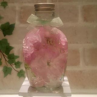 展示中 華やかなボタン桜(その他)
