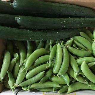 キュウリ6本&スナップエンドウ300g(野菜)