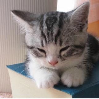 リランドチュール(Rirandture)のびっきー様 専用ページ  よろしくお願いいたします😊(ニット/セーター)