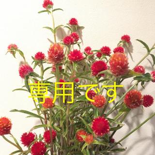千日紅・赤花&黄花・まある様専用(ドライフラワー)