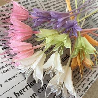 花材 ニゲラオリエンタリス 5色(ドライフラワー)