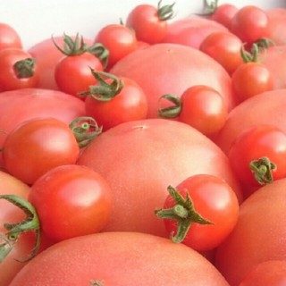 オマケ付【訳あり】ソムリエトマト4㎏(16玉~30玉)(野菜)