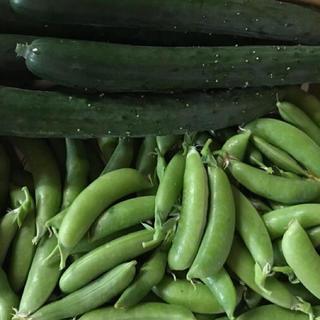キュウリ3本とスナップエンドウ500g(野菜)