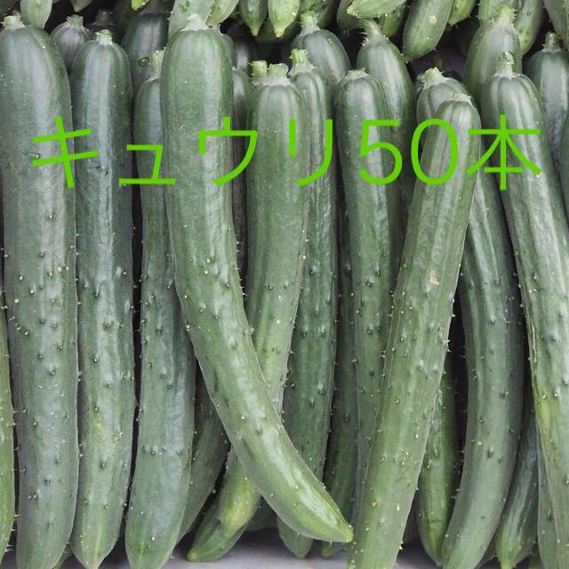 キュウリA品50本 食品/飲料/酒の食品(野菜)の商品写真