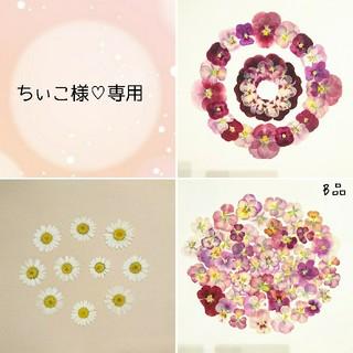 ちぃこ様専用♡【P-4】レッド・ピンク系ビオラ ノースポール 押し花セット (ドライフラワー)