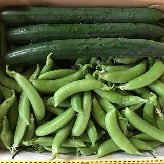 キュウリ6本とスナップエンドウ300g(野菜)