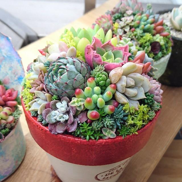 宅配便込み!多肉植物 寄せ植え そのまま飾れます!プレゼントにも♪ ハンドメイドのフラワー/ガーデン(その他)の商品写真