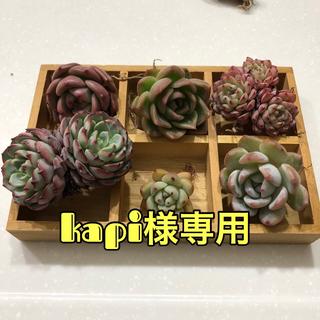 kapi様 専用(その他)