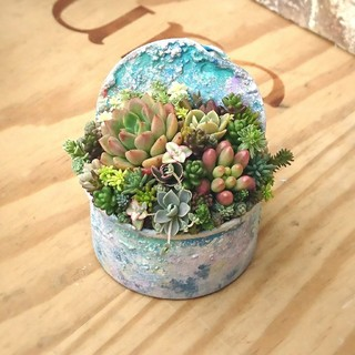 4種郵便込!多肉植物 寄せ植え そのまま飾れます!プレゼントにも♪(その他)