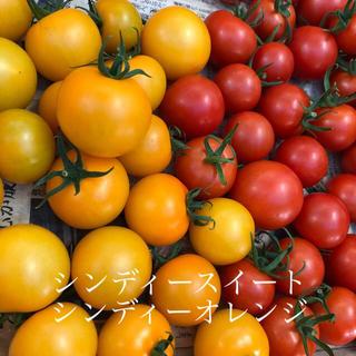 中玉トマト2キロ(野菜)
