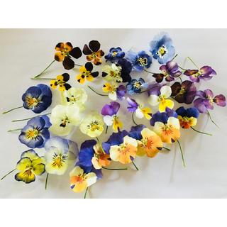 花材❁ビオラ❁(可愛い色揃い)(ドライフラワー)