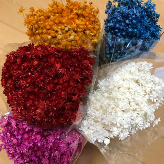 スターフラワー マルセラ 100本 花材(ドライフラワー)