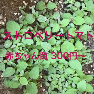 ストロベリートマト苗2つ(野菜)