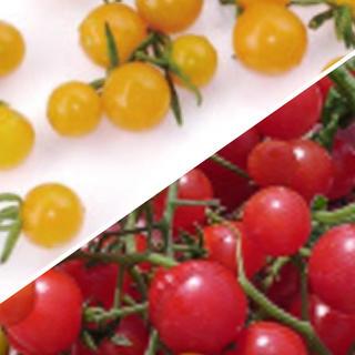 マイクロトマト (赤.黄) 種(野菜)
