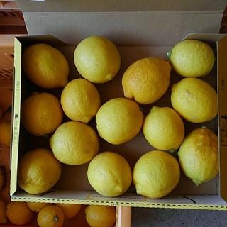 レモン無農薬3(フルーツ)