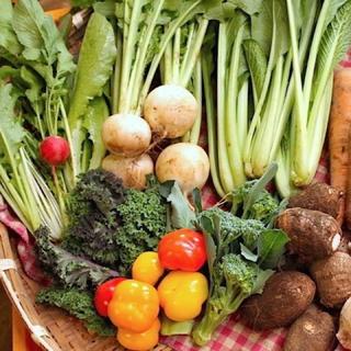 成田産 お野菜詰め合わせ7品80サイズ(栽培期間中無農薬、無化学肥料)(野菜)
