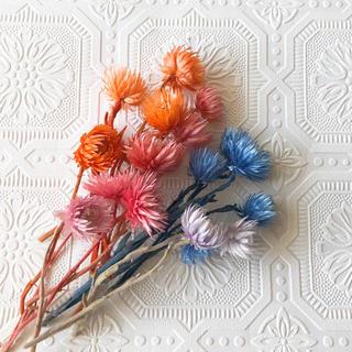 シルバーデージーセット ハーバリウム キャンドル 花材 ハンドメイド(ドライフラワー)