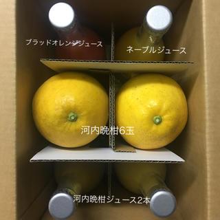河内晩柑6玉とストレートジュース3種(フルーツ)