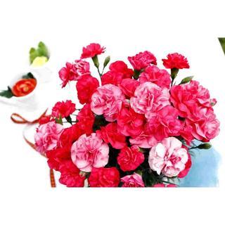 早割り中!金賞農家のカーネーション「赤かピンク」◆ラッピングあり5号鉢(生花(プランター)