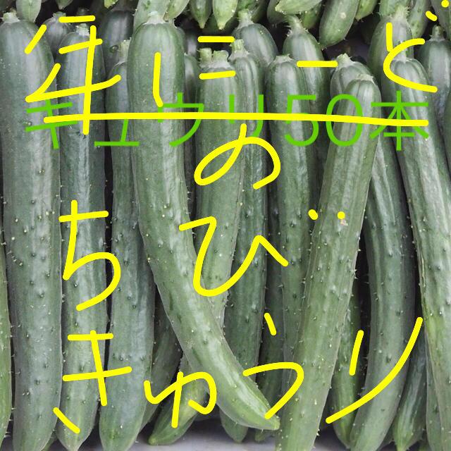 チビキュウリ 食品/飲料/酒の食品(野菜)の商品写真