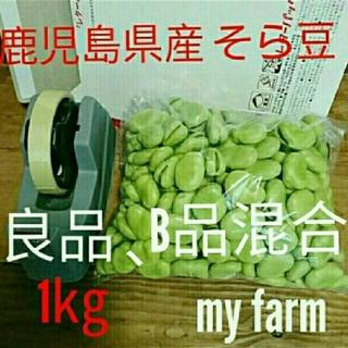 【無農薬】鹿児島県指宿産 むきそら豆一キロ A良品 B少し訳あり品混合