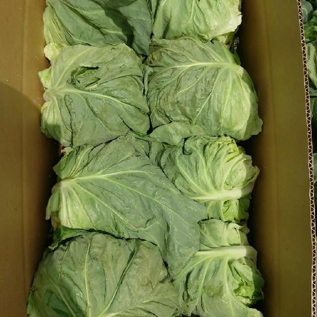 はな様専用 三浦の春キャベツ 食品/飲料/酒の食品(野菜)の商品写真