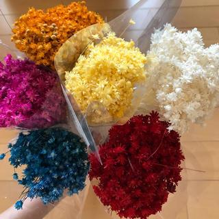 スターフラワー  マルセラ  120本  花材 セット(ドライフラワー)