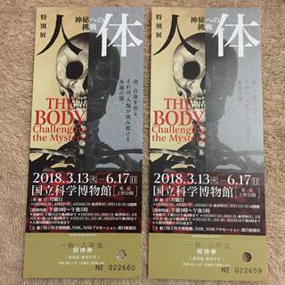 特別展 人体 チケット 2枚(美術館/博物館)